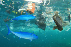 Plastikmüll in den Ozeanen