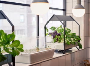 sustainable home tips plants
