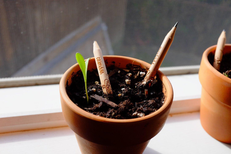 El primer lápiz con semilla que puedes plantar