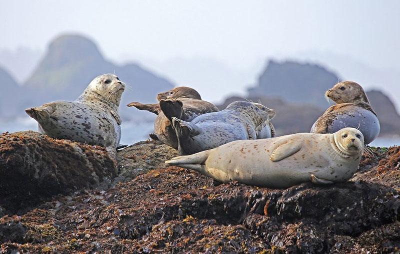 Animales en peligro por el plástico