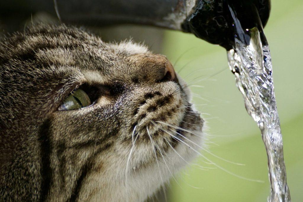 13 Mitos y verdades sobre el agua potable